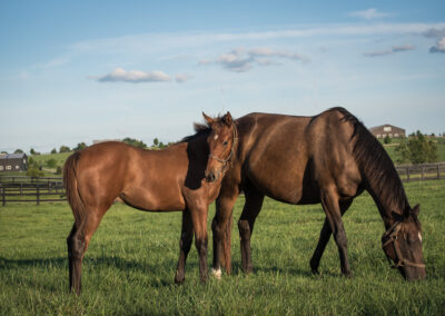 a Thoroughbred broodmare and her foal
