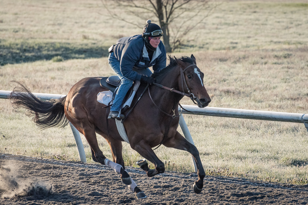 A racehorse galloping to the right