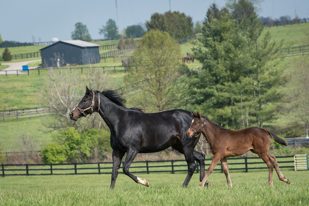 a Thoroughbred broodmare and her foal moving across the image